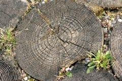 cirklar trä Arkivbilder
