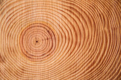 Cirklarna av sörjaträdet Royaltyfri Foto