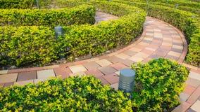 Cirkulärsnittbuske i utomhus- trädgård Arkivbilder