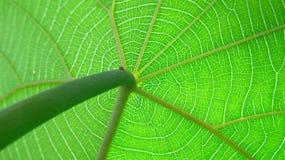 Cirkulationssystem av naturen Arkivfoton
