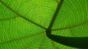 Cirkulationssystem av naturen Arkivfoto