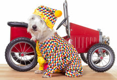 Cirkusclownhund och clownbil royaltyfria bilder
