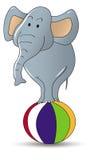 cirkuselefant Arkivfoton