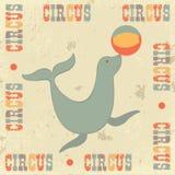 Cirque de cru avec le sceau Photographie stock libre de droits