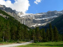 Cirque de Gavarnie ( France ). Pine forest with the Gavarnie cirque glacier to the bottom Royalty Free Stock Images
