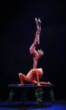 Cirque drömmer (djungelfantasin), den heatrical akrobatiska cirkusperfoen Royaltyfri Bild