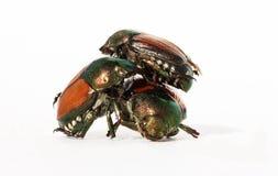 Cirque du bug Stock Photo