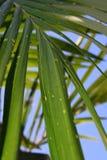Ciérrese encima de hojas de palma Fotos de archivo
