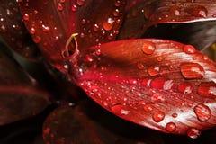 Ciérrese encima de la hoja Imagen de archivo libre de regalías