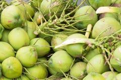 Ciérrese encima de los cocos verdes Fotos de archivo