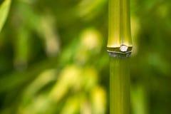 Ciérrese encima del tallo de bambú Imágenes de archivo libres de regalías