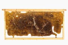 Ciérrese para arriba de daño de la larva de la polilla de cera Imagen de archivo libre de regalías