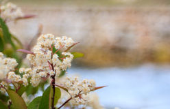 Ciérrese para arriba de flores Fotografía de archivo libre de regalías