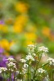 Ciérrese para arriba de flores Imagenes de archivo