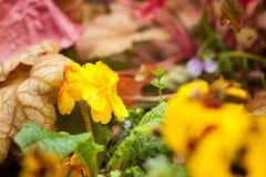 Ciérrese para arriba de flores amarillas Fotografía de archivo