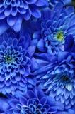 Ciérrese para arriba de la flor azul Fotos de archivo libres de regalías