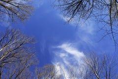 Cirrus σύννεφα επάνω από τα δέντρα Στοκ Φωτογραφίες