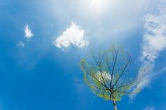 Cirrus blancs dans le ciel bleu image stock