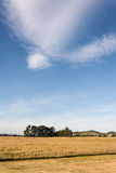 Cirrus clouds above grassy meadow Royalty Free Stock Images
