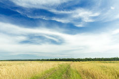Cirrus clouds on azure sky above rye field and dirt road Royalty Free Stock Image