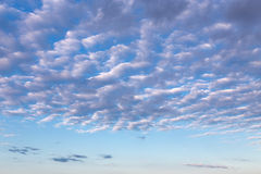 Cirrus clouds in blue sky. Morning cirrus clouds against a blue sky royalty free stock photography