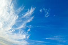 The cirrus clouds. Cirrus clouds in blue sky in summer royalty free stock photos