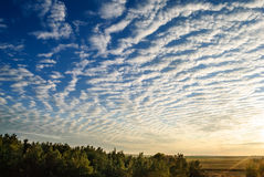 Cirrus clouds over the forest. royalty free stock photography