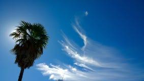 Cirrus-Wolken und Palme Stockfotografie