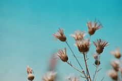 Cirsium. Plants and the sea on the background Royalty Free Stock Photo