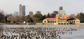 Cirt Park Lake Ferril Frozen Water Migrating Geese royalty free stock photography