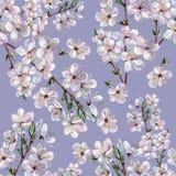 Ciruelo floreciente, acuarela Imágenes de archivo libres de regalías