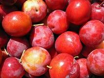 Ciruelo rojo Imagen de archivo libre de regalías