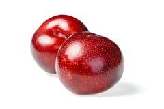 Ciruelo rojo fresco Fotos de archivo libres de regalías