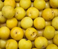 Ciruelos amarillos coloridos frescos cosechados imagen de archivo libre de regalías