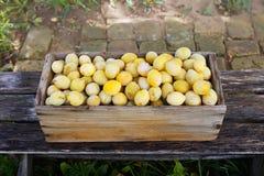 Ciruelos amarillos frescos Frutas maduras en una caja de madera en fondo de los tableros foto de archivo libre de regalías