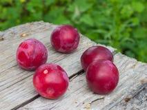 Ciruelos de cereza Fotografía de archivo libre de regalías