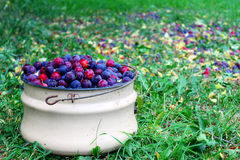 Ciruelos de cereza Fotografía de archivo