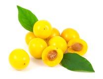 Ciruelos de cereza amarillos con las hojas Fotos de archivo