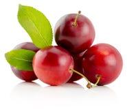 Ciruelos de cereza rojos aislados en el fondo blanco Foto de archivo libre de regalías