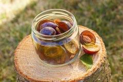 Ciruelos en el tarro de cristal en tocón de madera en jardín el día soleado Fotos de archivo libres de regalías