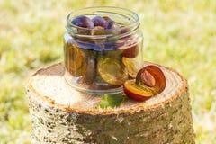 Ciruelos en el tarro de cristal en tocón de madera en jardín el día soleado Imágenes de archivo libres de regalías
