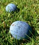Ciruelos en la hierba Fotografía de archivo libre de regalías