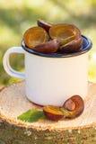 Ciruelos en taza metálica en tocón de madera en jardín el día soleado Imagen de archivo libre de regalías