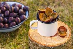 Ciruelos en taza metálica en tocón de madera en jardín el día soleado Foto de archivo libre de regalías