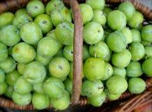 Ciruelos verdes orgánicos Foto de archivo libre de regalías