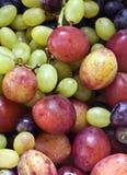 Ciruelos y uvas Foto de archivo libre de regalías
