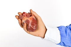 Cirujano cardiaco que lleva a cabo un corazón Imagen de archivo