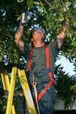 Cirujano de árbol en el trabajo Imágenes de archivo libres de regalías