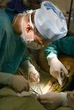 Cirujano que hace phlebectomy Foto de archivo libre de regalías