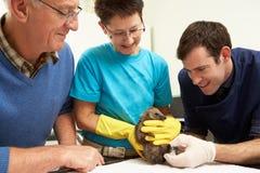 Cirujano veterinario de sexo masculino que examina el erizo rescatado foto de archivo libre de regalías